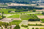 Vineyards near Gordes, Vaucluse Department, Provence, France — Stock Photo