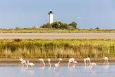 Flamingos and Gacholle lighthouse, Parc Regional de Camargue — Stock Photo