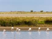 Flamingos in Camargue, Provence, France — Stock Photo