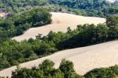 Fields with trees, Provence, France — Stock Photo