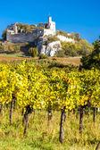 Ruins of Falkenstein Castle with vineyard in autumn, Lower Austr — Stock Photo