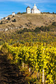 Calvary of Mikulov with autumnal vineyard, Czech Republic — Fotografia Stock