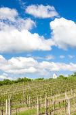 Spring vineyard near Hnanice, Southern Moravia, Czech Republic — Stock Photo