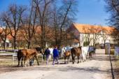 Stud farm, Kladruby Kralove nad Labem — Stock Photo