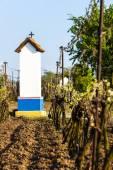 Guds tortyr med vingård nära Nechory, Tjeckien — Stockfoto