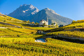 Vineyards below church at Conthey, Sion region — Stock Photo