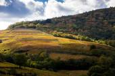 Vineyards near Odenas, Beaujolais, Rhone-Alpes, France — Stock Photo