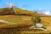 Vineyards grand cru in Beaujolais witha church, Fleurie — Stock Photo