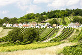 Wine cellars with vineyards, Galgenberg — Stock Photo