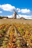 Vineyard with windmill near Chenas, Beaujolais — Stock Photo