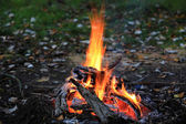 Bonfire in forest — Stock Photo