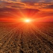 Evening on ploughed field — Stock Photo
