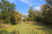 Autumn on bog — Stock Photo