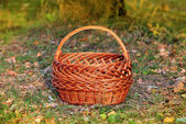 Basket in autumn forest — Stock Photo