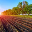 Agricultural field — Stock Photo #54841619