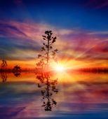 Pianta su sfondo tramonto con riflesso d'acqua — Foto Stock