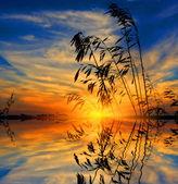 Grass on sunset background — Stock Photo