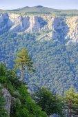 Arbres et montagnes — Photo