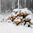 Pine logs in forest at winter time — Foto de Stock   #59389119