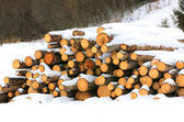 Wooden logs under in winter forest — Stock Photo