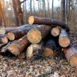 Wooden logs in forest — Stock Photo #64316491