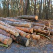 Wooden logs in forest — Stock Photo #64316499