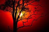 Gün batımı ve ağaç — Stok fotoğraf