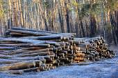 Wooden logs in forest — Stock Photo