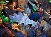 Frozen leafage background — Stockfoto