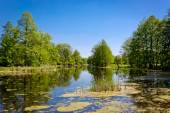 Hot summer day on bog — Stockfoto