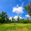 Green meadow in forest — Stock Photo #66548693