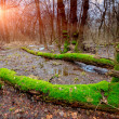 Sunset on bog in forest — Stock Photo #66764097