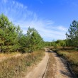 Rut road in forest — Stock Photo #67747447