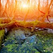 Sunset on bog — Stock Photo #68263541