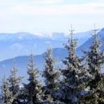 Trees on winter mountains background — Stock Photo #71730049