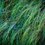 Green grass — Stock Photo #80239024