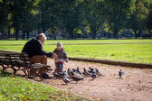 Grandfather and granddaughter age 4 years feeding pigeons — Stock Photo