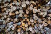 Firewood in the stack — Stock Photo