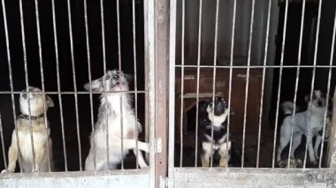 Stray dogs in the shelter in Ukraine — Stock Video