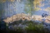Stucco cracked texture — Stock Photo