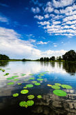 Lily Pads and Clouds — Stock Photo