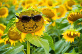 Sunflower with Glasses and a Smile — Stock Photo