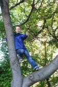 Boy climbing on tree — Stock Photo
