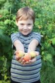 Rapaz, oferecendo maçãs — Fotografia Stock