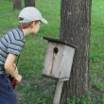 Little boy near starling house — Stock Photo #69929387