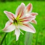 Detail of flower — Stock Photo #66835553