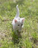 Sevimli kedicik — Stok fotoğraf