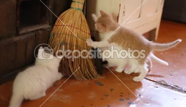 Cute  kittens playing indoor — Stock Video
