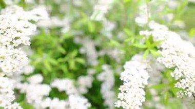 Jardín floreciente — Vídeo de stock