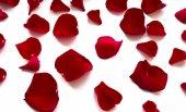 Płatki róż — Zdjęcie stockowe